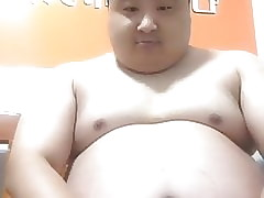 chinese obese cur